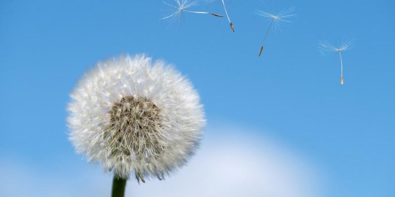 Allergie en anti-virale afweer